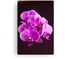 Plant, Orchid, Phalaenopsis, Pink Flowers  Canvas Print