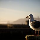 San Francisco's Seagull by MarceloPaz