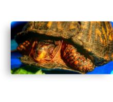 Box Turtle Canvas Print