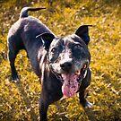 Funny dog by MarceloPaz