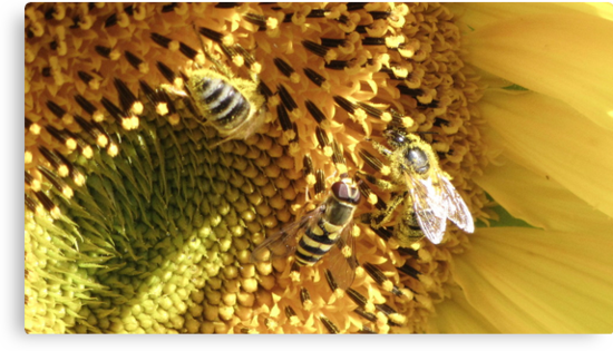 Bees by Mikhail Krupenin