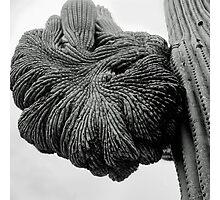 Cactus Arm Gone Crazy Photographic Print