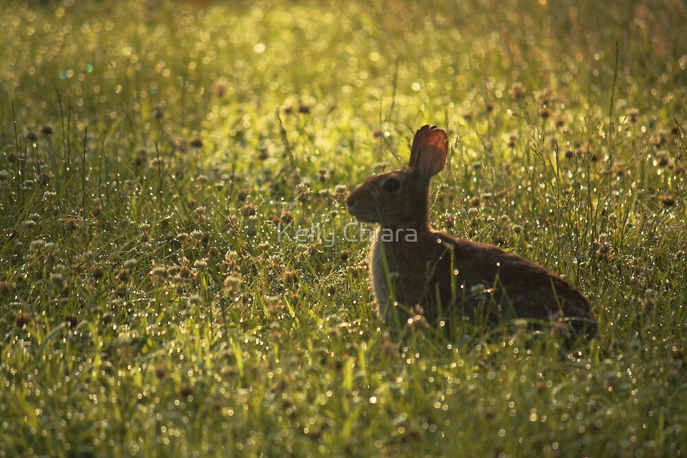 Cottontail in Dewy Clover by Kelly Chiara