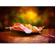 Sugar Maple Photographic Print