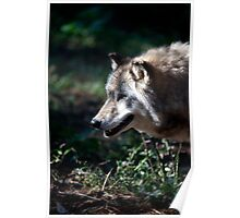 Wandering Wolf Poster