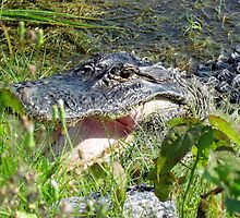 Gator Smile by Cynthia48