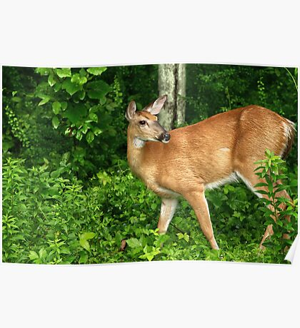 Backyard Doe Poster