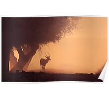Lonely Deer At Dawn Poster