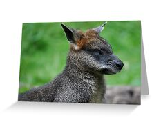 Go Away, I'm Sleeping! (Swamp Wallaby) Greeting Card
