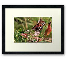 Fritillary Butterfly Framed Print