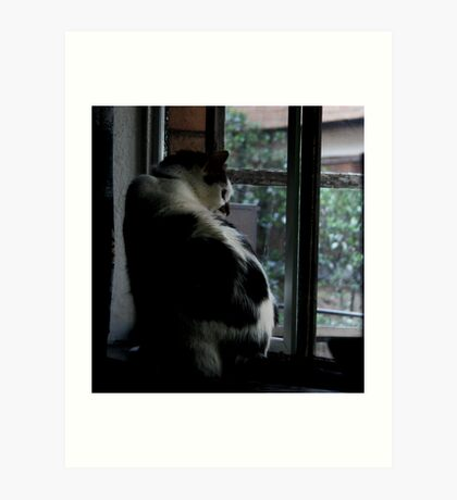 How Much Is That Kitty In The Window Art Print