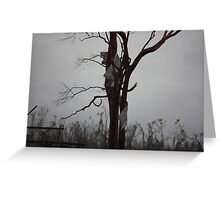 part of house roof up a tree Cyclone Yasi - Kennedy, North Queensland, Australia Greeting Card