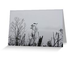 rescue helicopter Cyclone Yasi - Kennedy, North Queensland, Australia Greeting Card