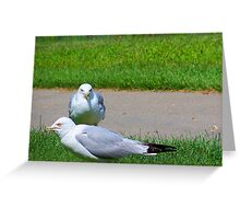 Seagulls in a Park Greeting Card