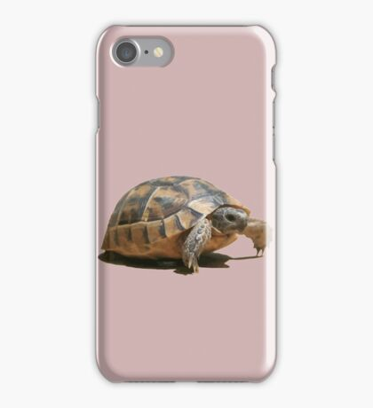 Portrait of a Young Wild Tortoise Isolated iPhone Case/Skin