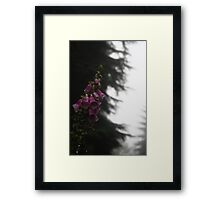 Dripping Foxglove Framed Print