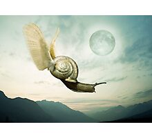 Snail's pace Photographic Print