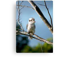 Kookie in a tree :) Canvas Print