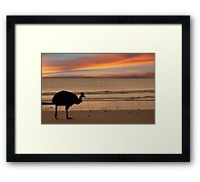 Cassowary Sunset Framed Print