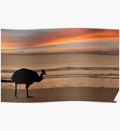 Cassowary Sunset Poster