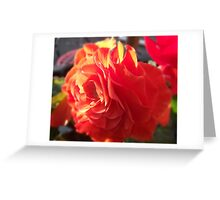 Begonia  Greeting Card
