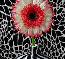 Daisy and graphic vase by Garry Gay