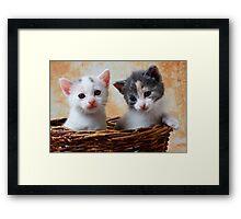 Two kittens in basket Framed Print