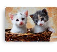 Two kittens in basket Canvas Print