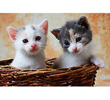 Two kittens in basket Photographic Print