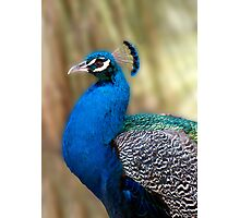 Beautiful Blue - peacock up close Photographic Print