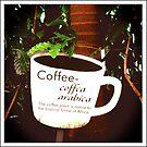 Coffee Arabica 2 by lroof