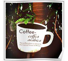 Coffee Arabica 2 Poster