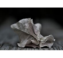 ....fallen fragility.... Photographic Print