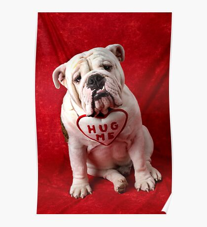 English Bulldog puppy hug me Poster