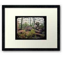Indoor Desert Habitat (TTV) Framed Print