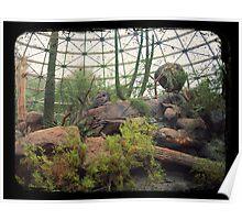 Indoor Desert Habitat (TTV) Poster