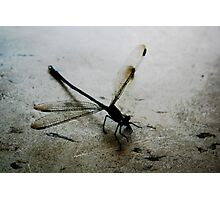 Here is a dragon that flys!! Photographic Print
