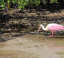 Roseate Spoonbill in Nature by Rosalie Scanlon