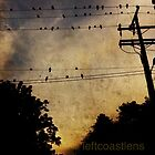 the evening visitors by leftcoastlens