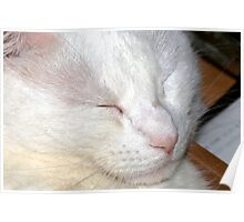 Shh...sleeping cat Poster