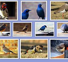 Birds! Birds! Birds! by Elizabeth Kendall