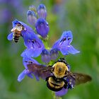 Bumble Bee and Honey Bee by Betsy  Seeton