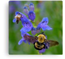 Bumble Bee and Honey Bee Canvas Print