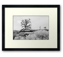 Desert Beauties Framed Print