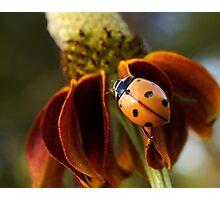 Ladybug Photographic Print