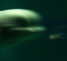 Beluga whale moving by anjafreak