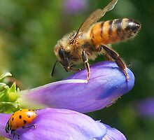 Bee and Ladybug by Betsy  Seeton