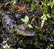 Reptilia by Michael Damanski