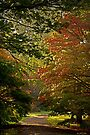 The Wonder of Westonbirt by almaalice