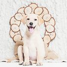 Lab Puppy with Christmas Wreath On a Cable Knit Blanket -Animal Rescue Portraits by AndreaBorden